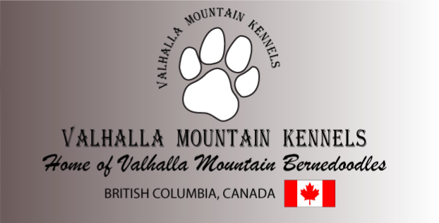 Valhalla Mountain Kennels Breeders Of Quality Bernedoodle Dogs